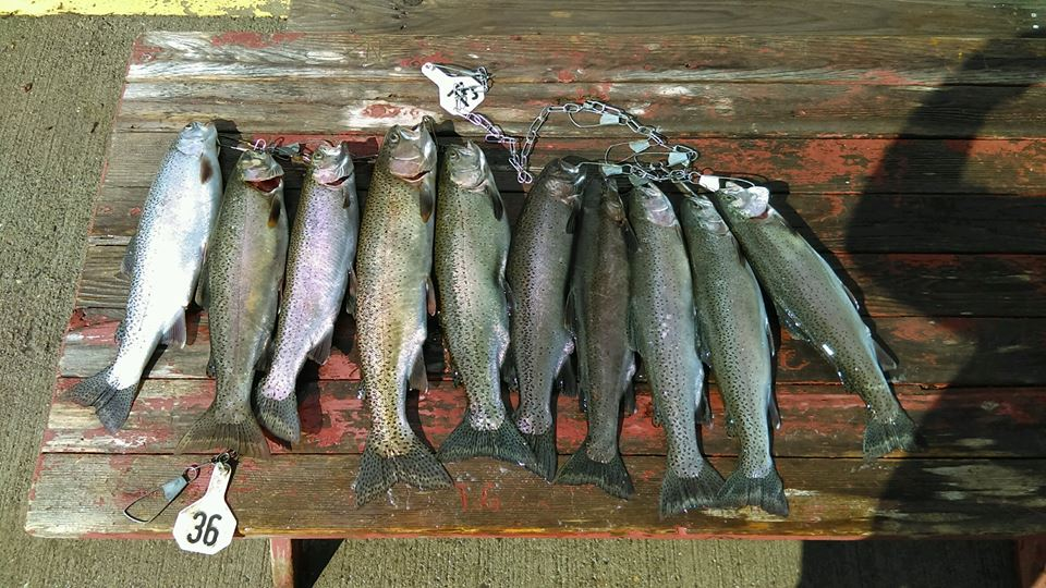 Central south oregon coast fishing reports for oct 7th for Tillamook fishing report