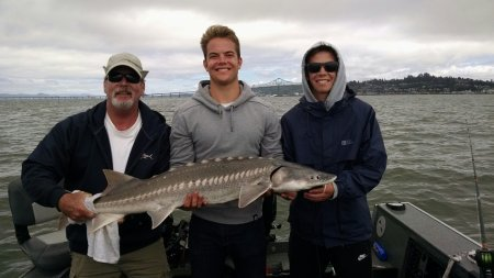 Jim, Travis, and Jared Adams from Livermore, CA landed over 16 sturgeon on the lower Columbia on 7/9