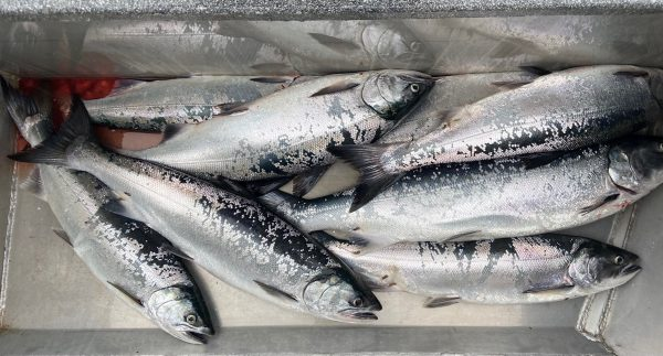 Oregon coho fishing limit - fishing report